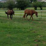 Appaloosa Ranch (3)