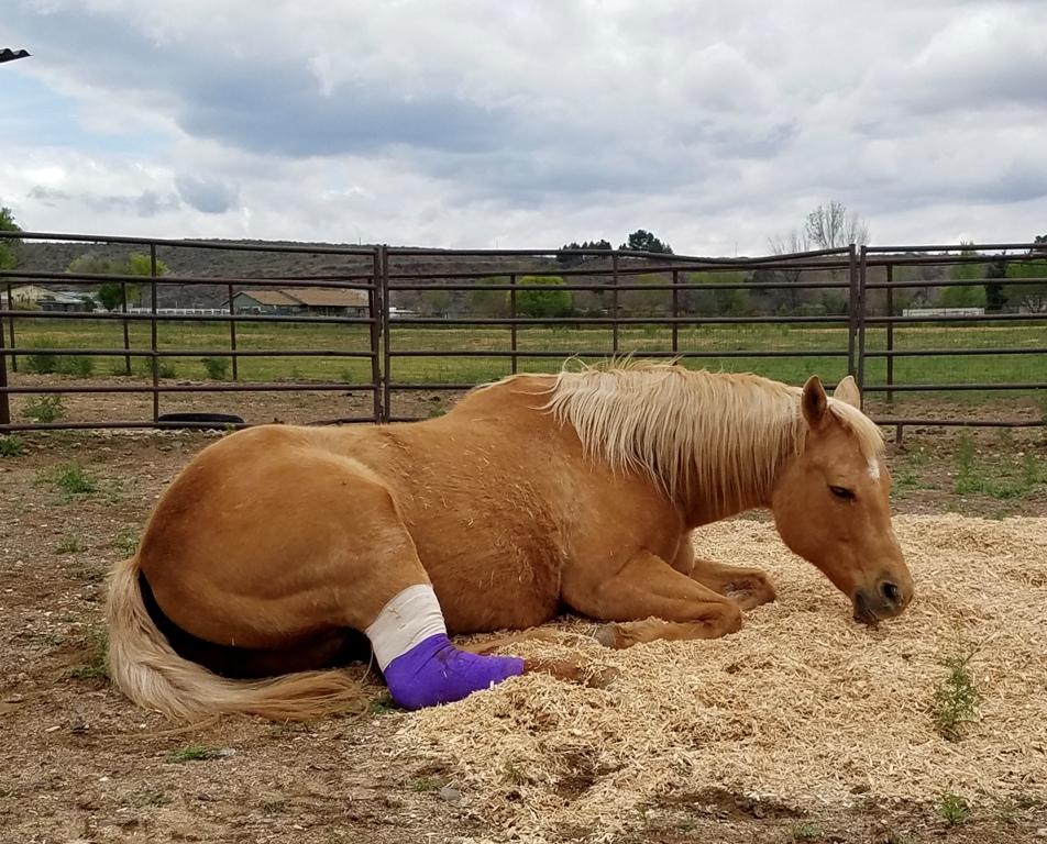 Horse Vet Services (1)