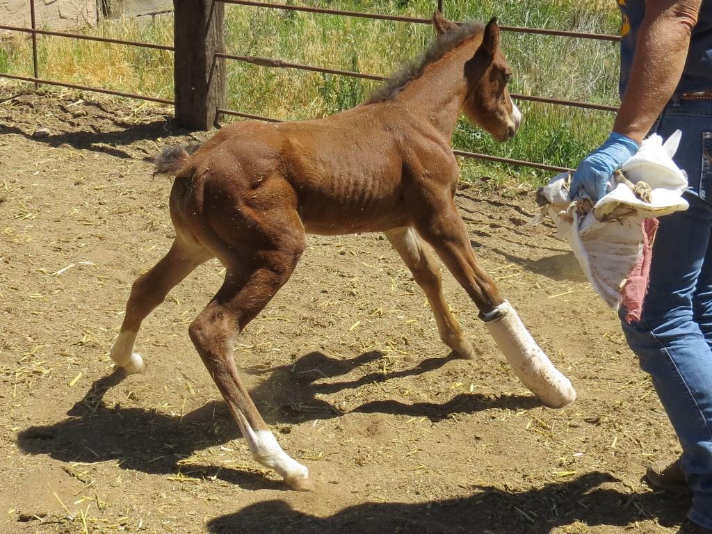 Horse Vet Services (2)