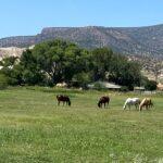 Medicine Man Ranch (3)