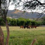 Monti Ranch (3)