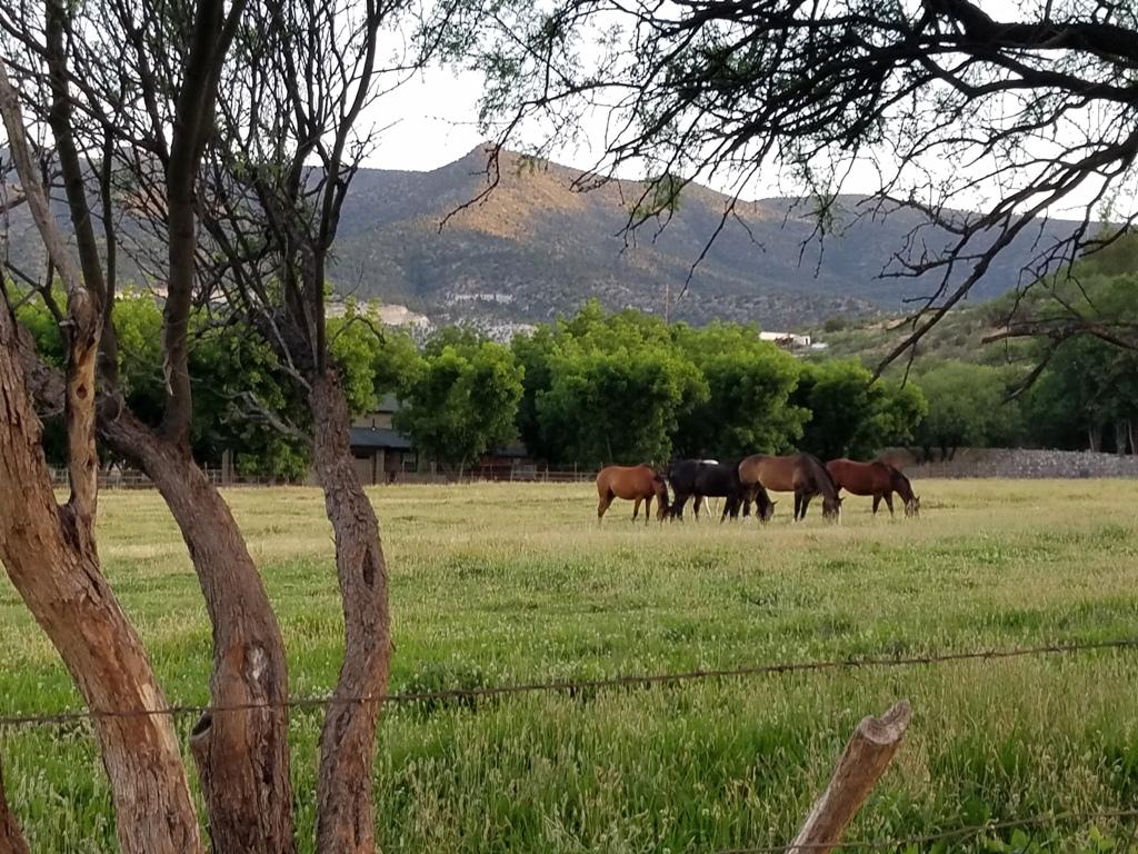 Pasture Boarding (4)