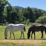 Appaloosa Ranch (2)